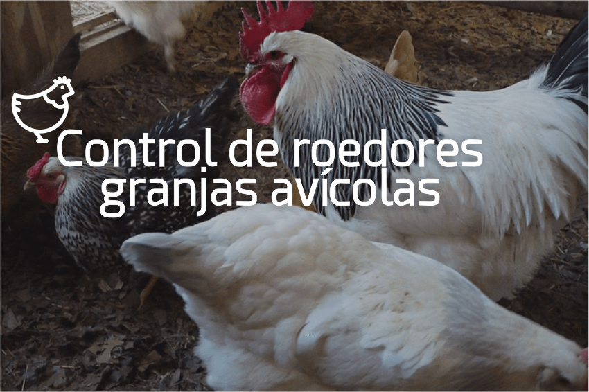 ControlRatasMarranerasGranjasAvicolas