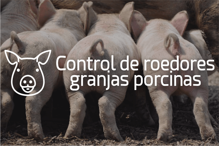 ControlRatasMarranerasGranjasPorcinas