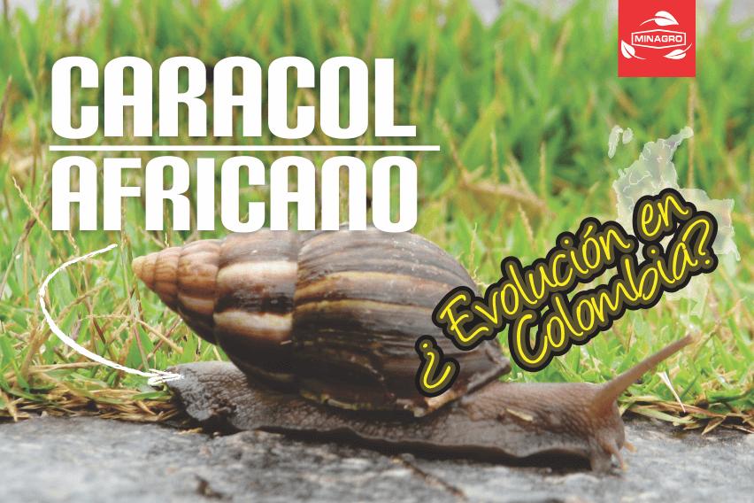 Recomendaciones para el control del caracol africano