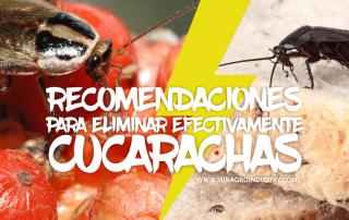 recomendaciones para el control de cucarachas