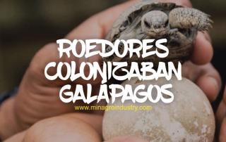 Ratas y ratones en islas galapagos