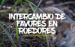 Intercambio de favores en roedores