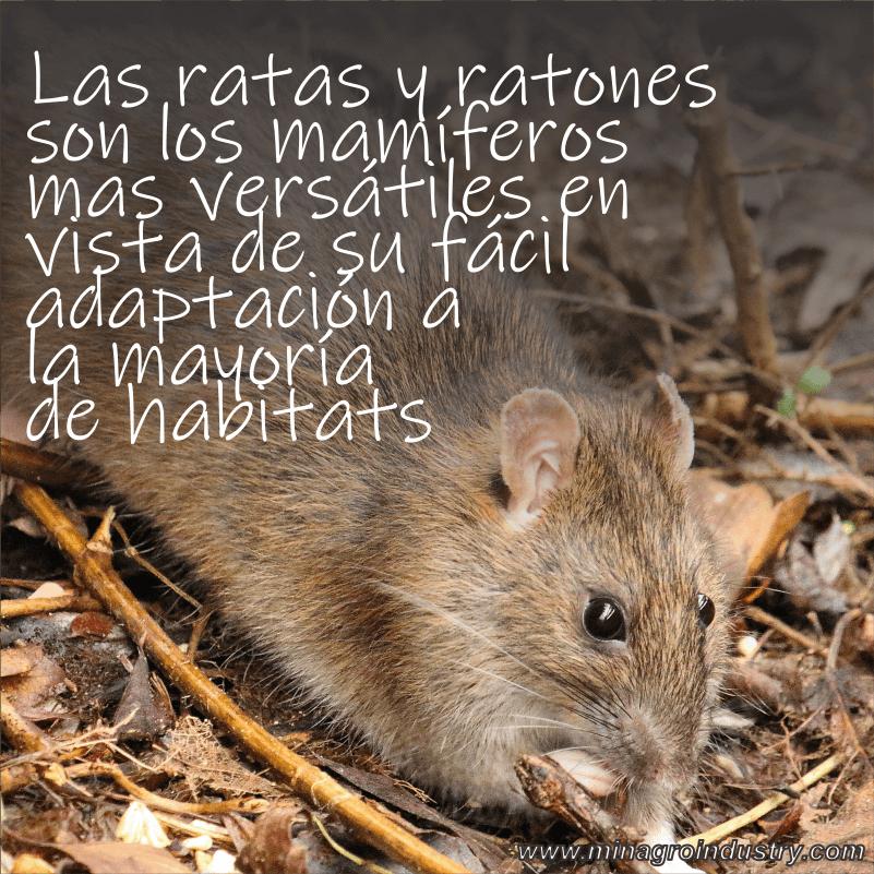 Minagro industria qu mica c mo matar ratones - Como matar ratones ...